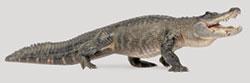 The Great Devou Park Alligator Hunt